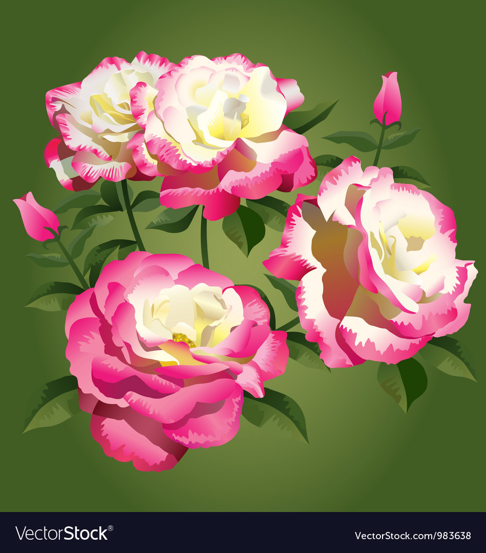 Roses - pink and yellow - vector image