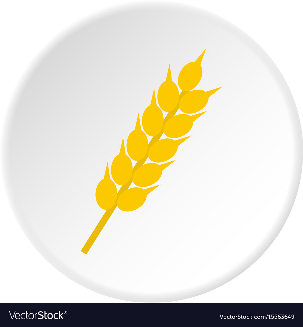 Wheat ear icon circle vector image