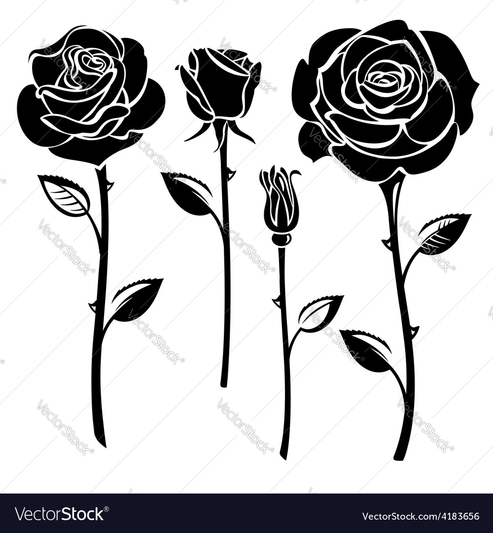 Black and white roses vector image