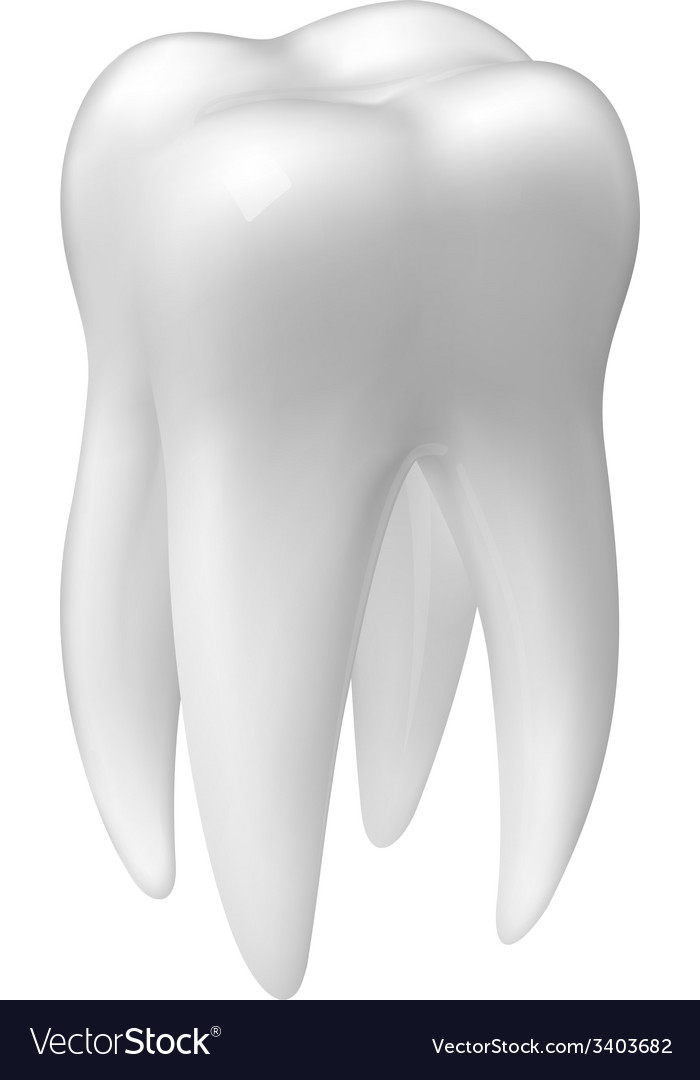 Molar tooth icon vector image