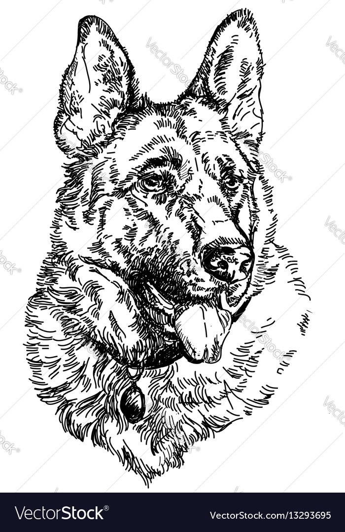 German shepherd hand drawing vector image