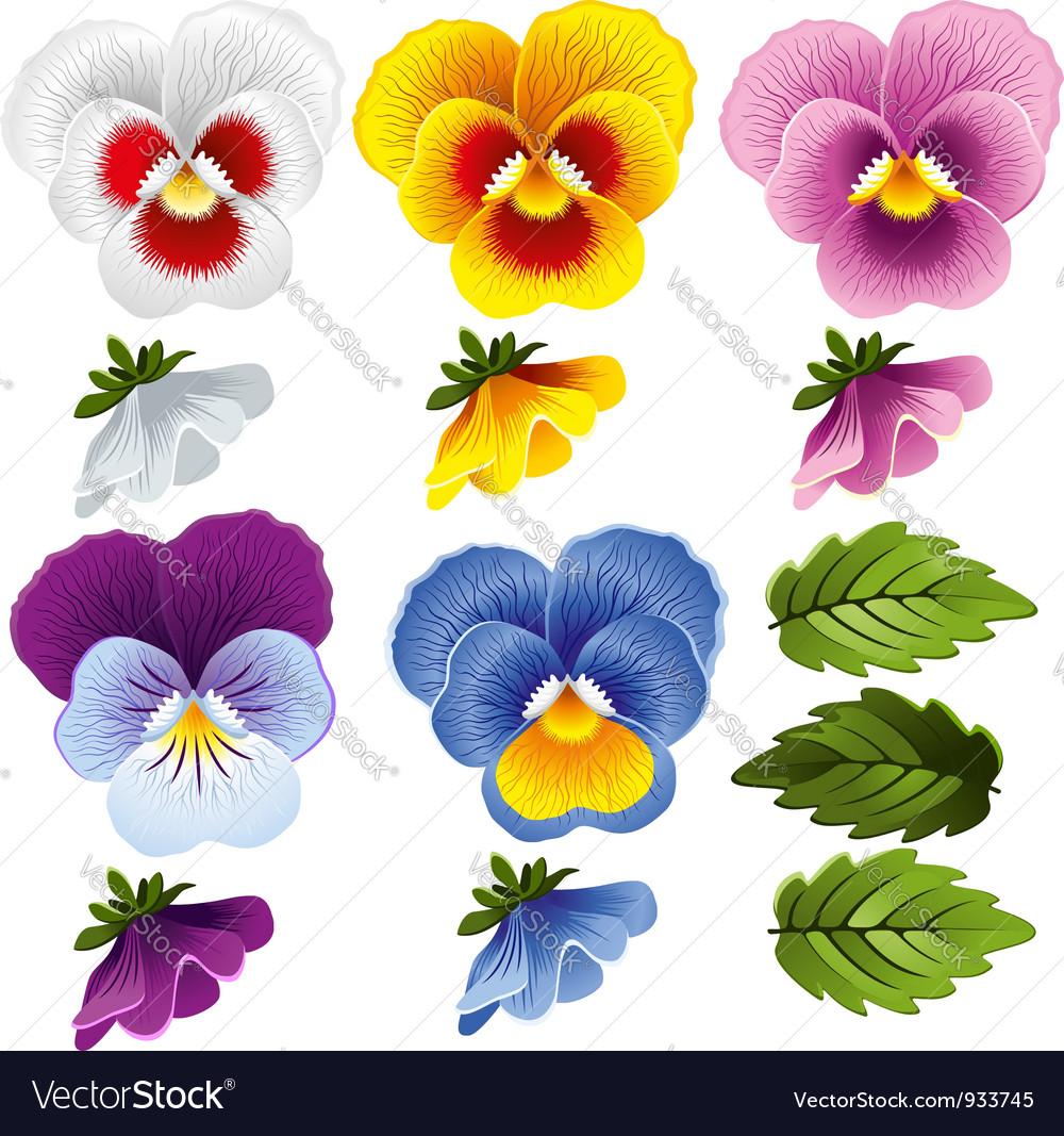 Viola set vector image