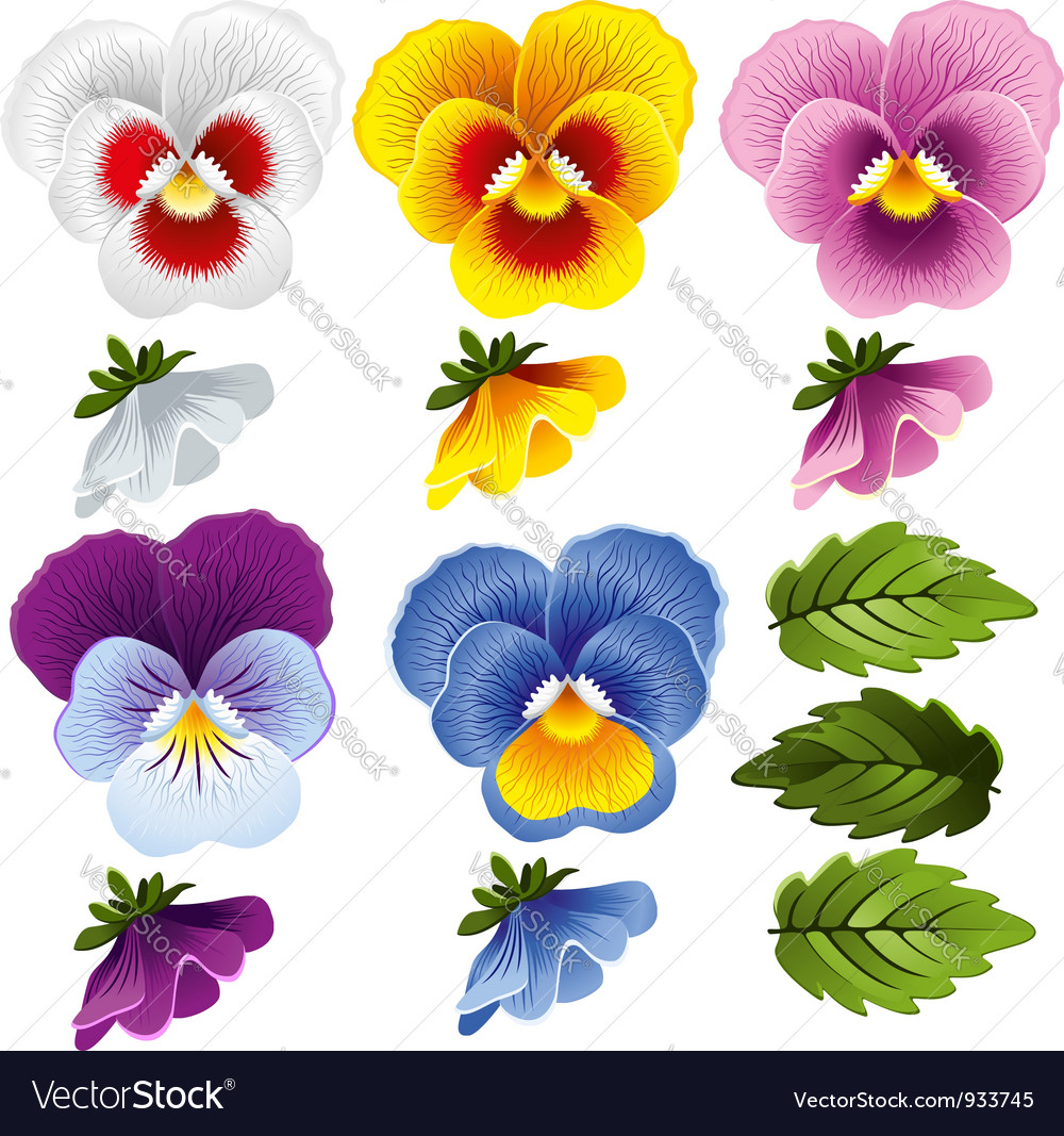 Viola set vector image