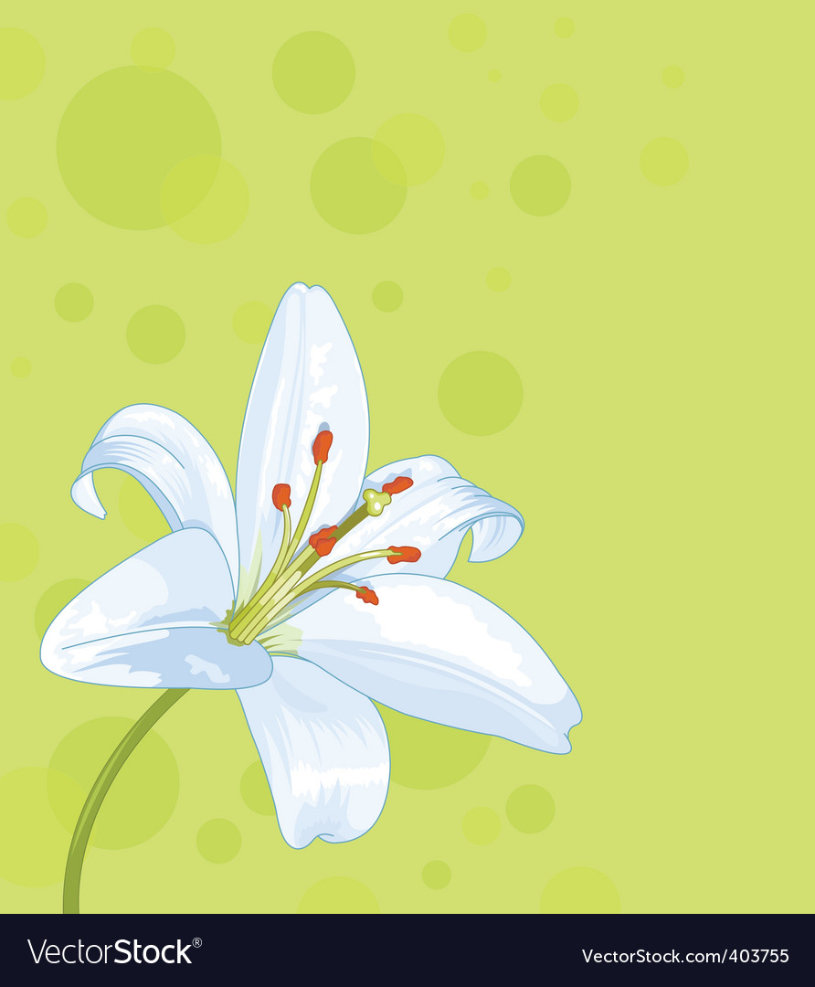 Lily seamless card vector image