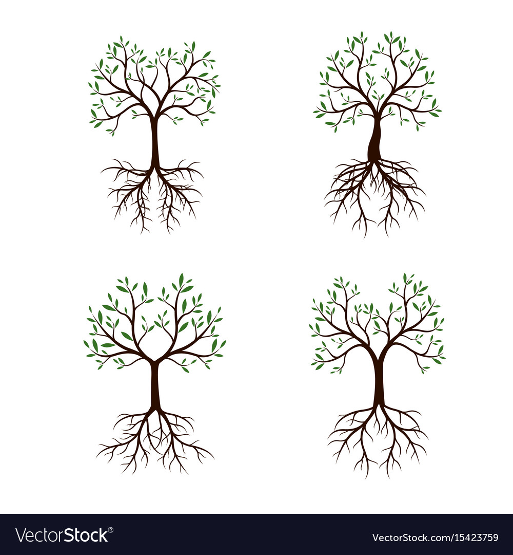 Set trees with leaves and roots vector image