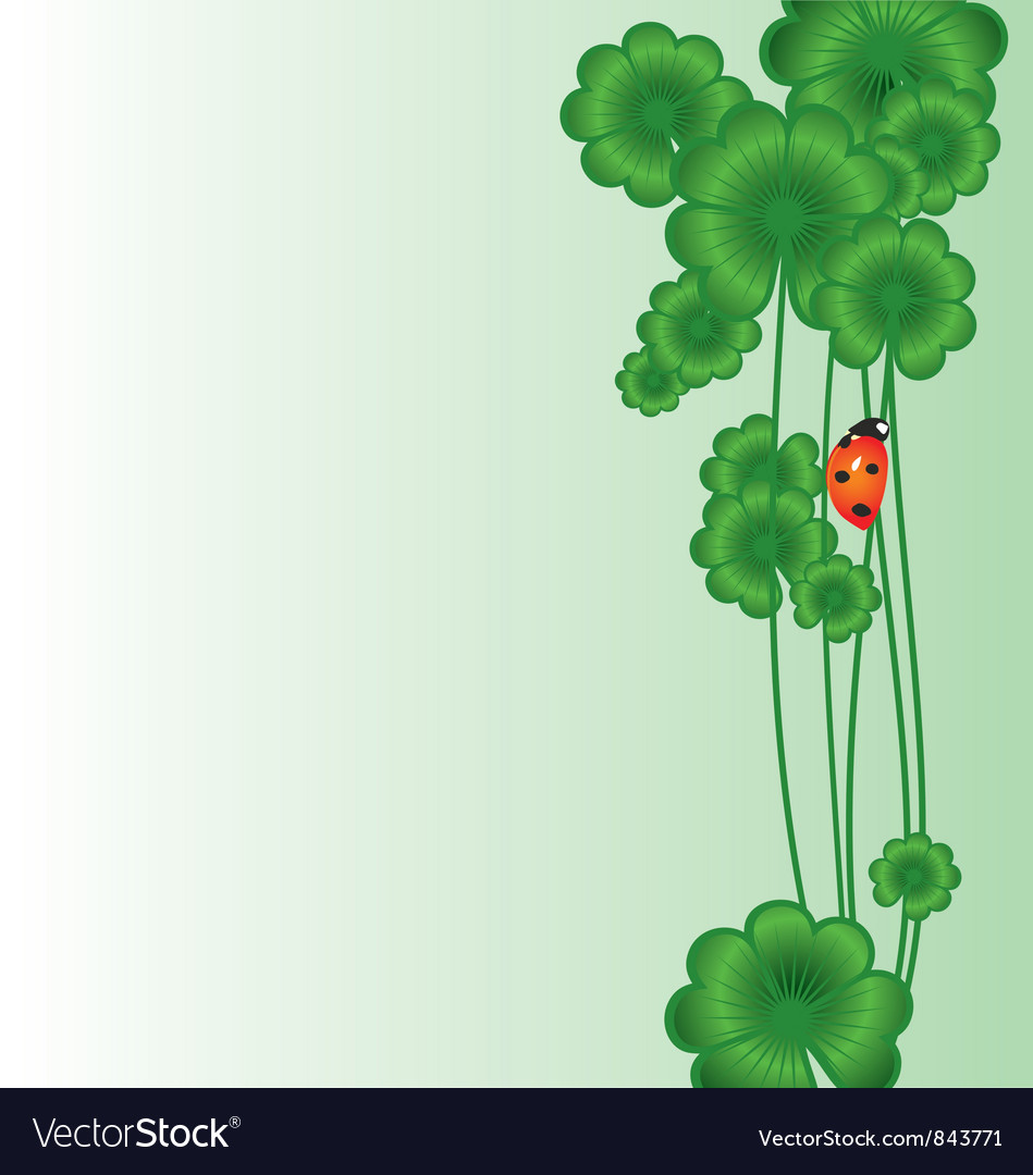 Shamrock white vector image