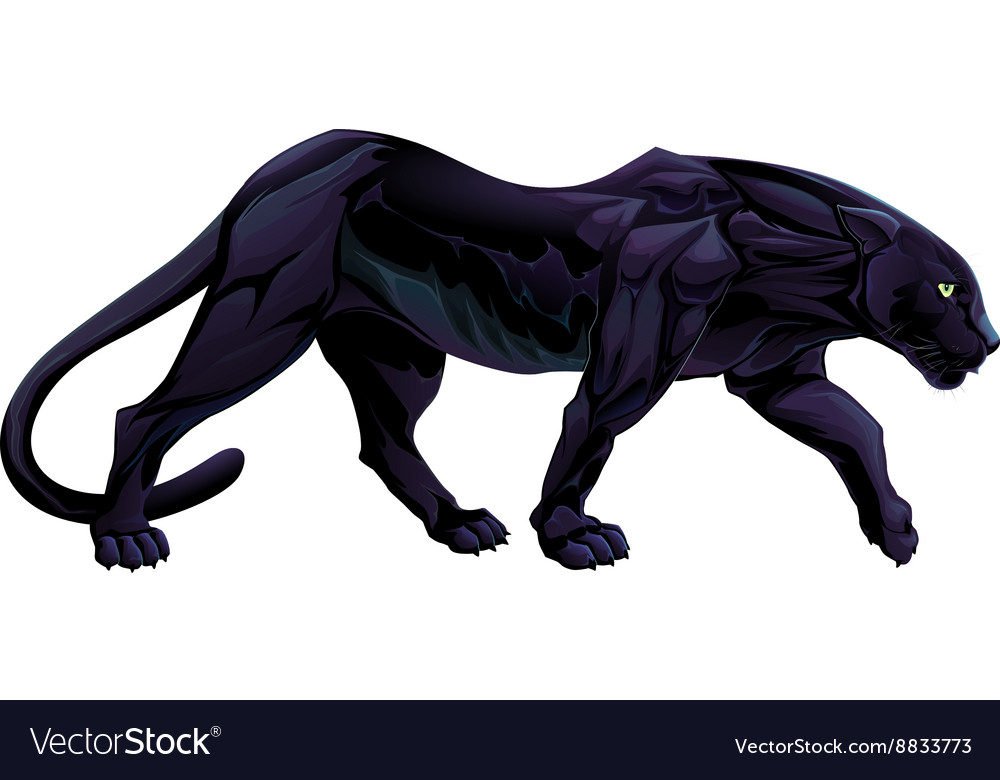 A black panther vector image