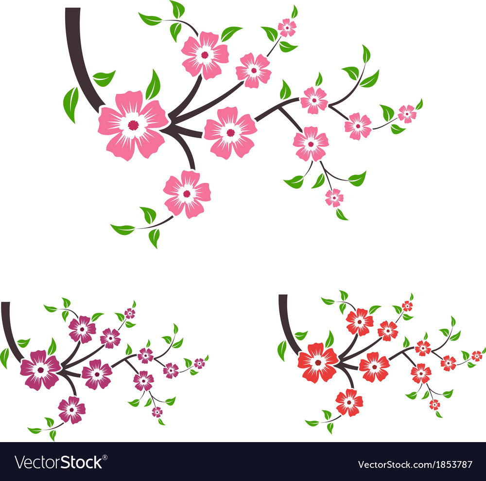 Branches of sakura vector image