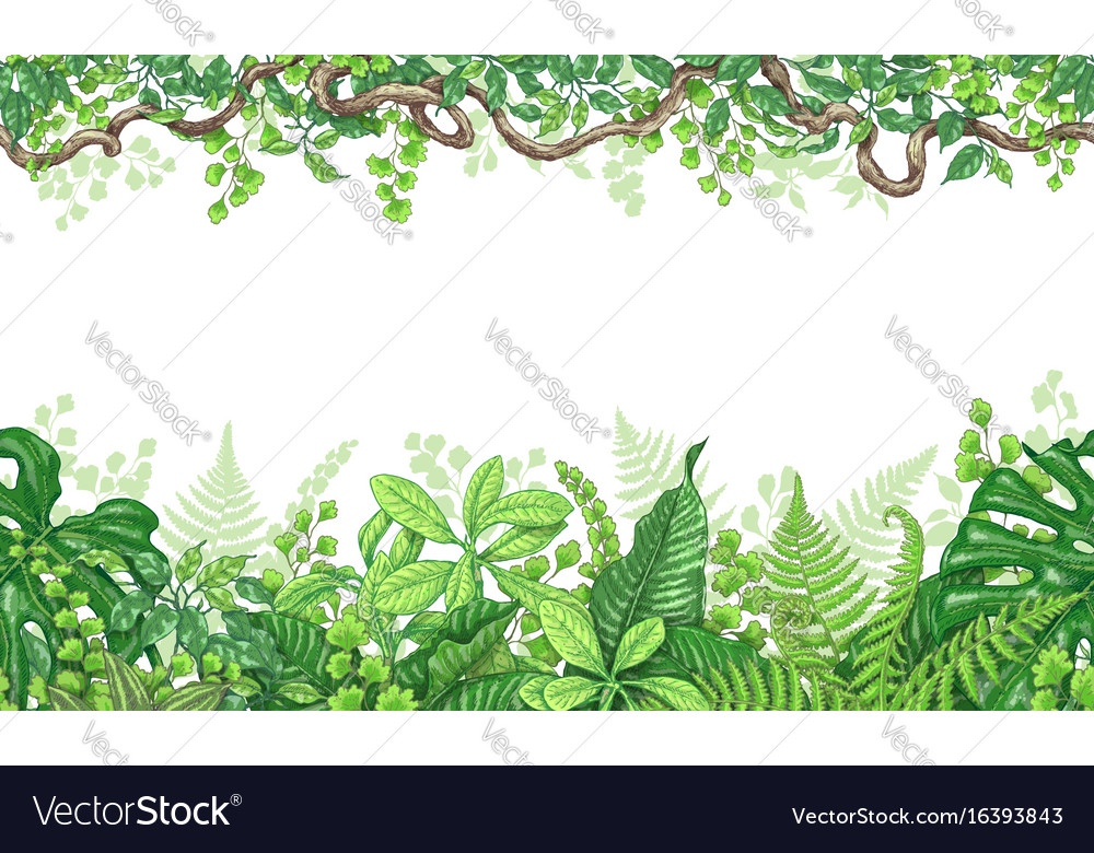 Tropical plants horizontal border vector image