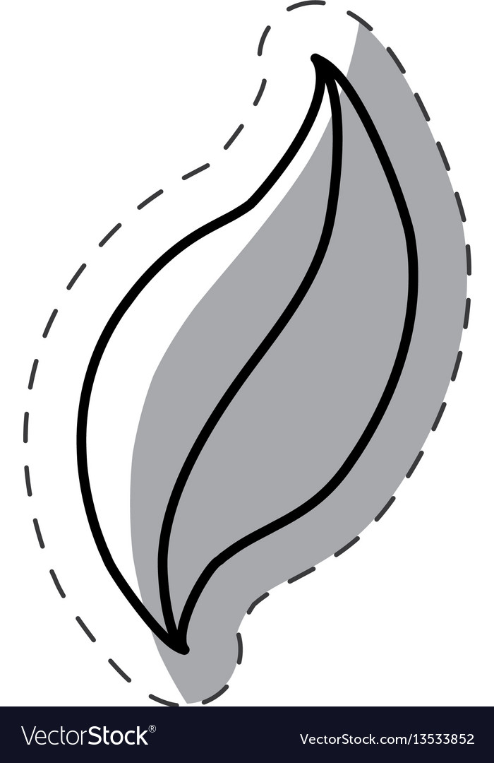 Leaf nature botanical monochrome vector image