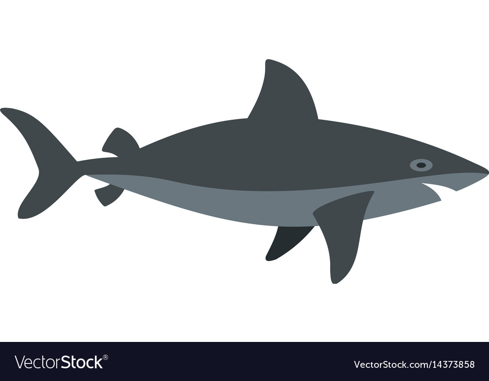 Grey shark fish icon isolated vector image