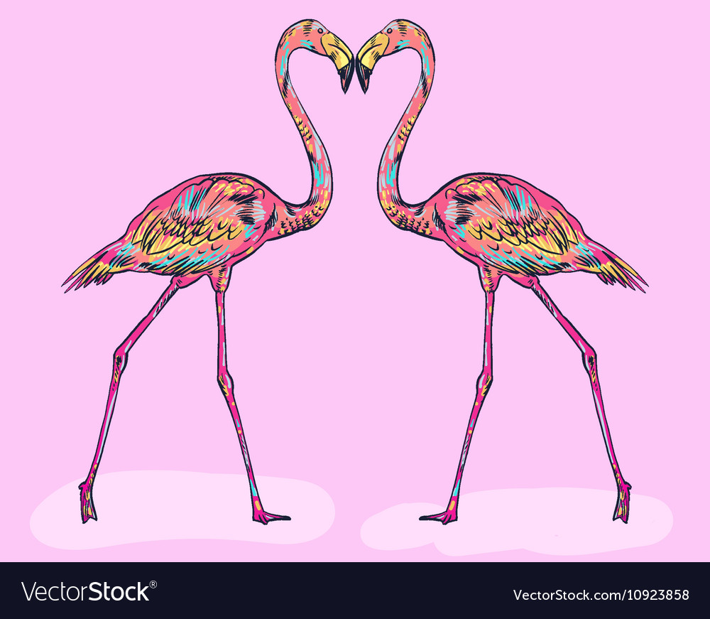 Pink flamingo isolated vector image