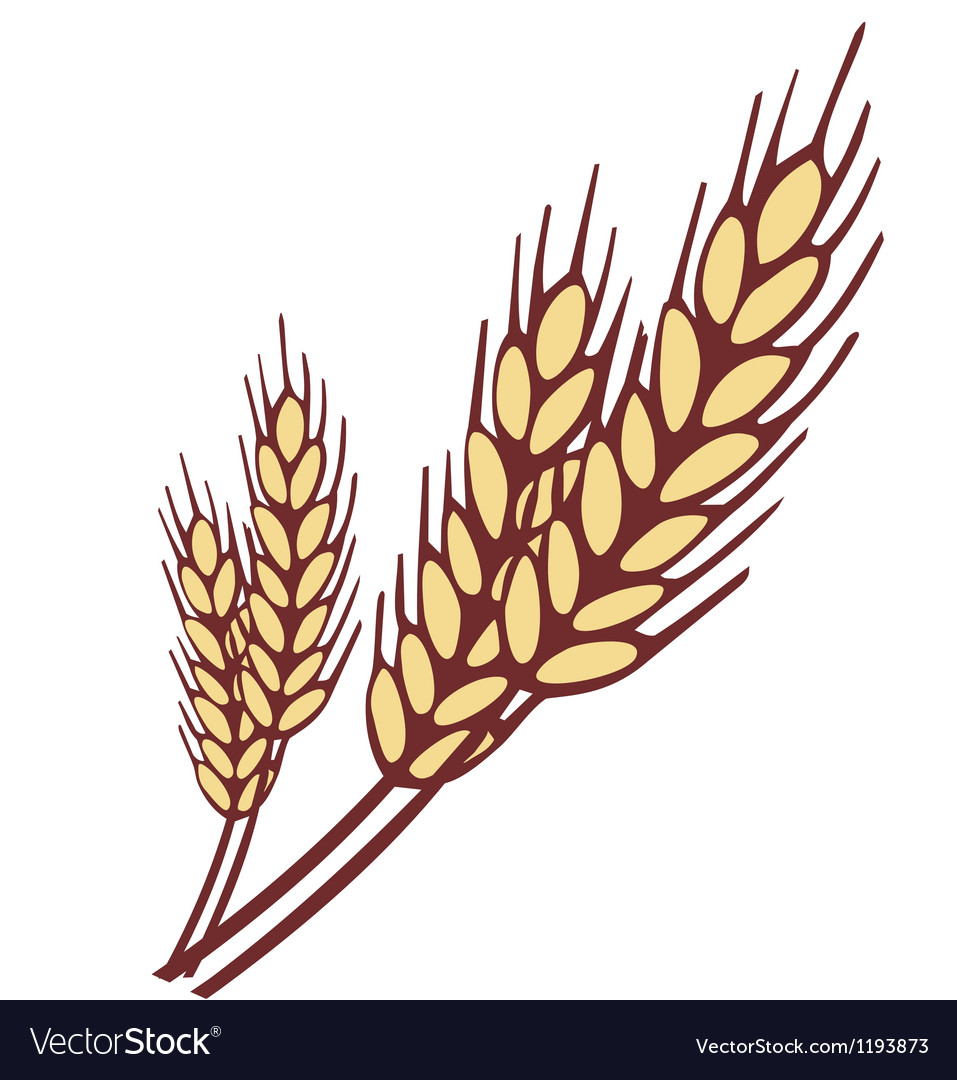 Wheat ear Vector Image