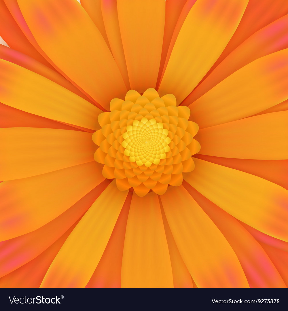 Orange gerbera flower realistic vector image