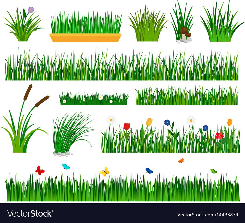 Growing grass template for garden vector image
