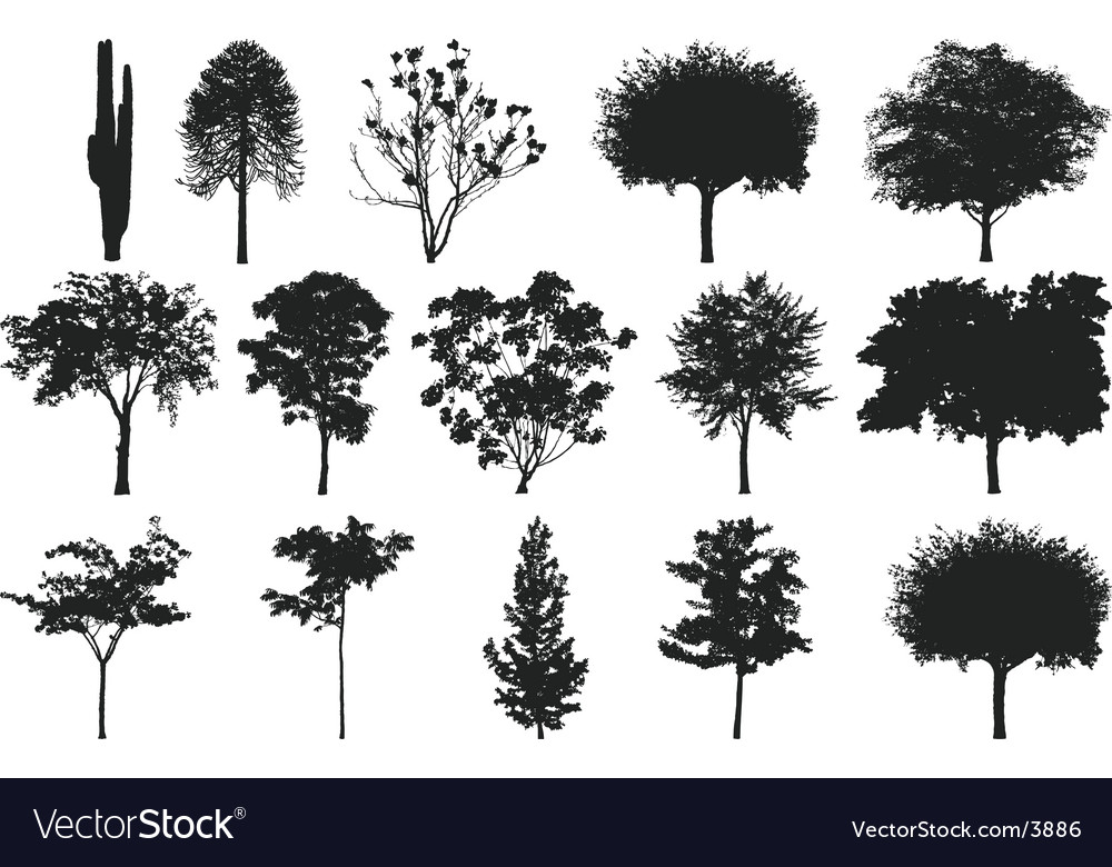 Silhouettes of trees Royalty Free Vector Image