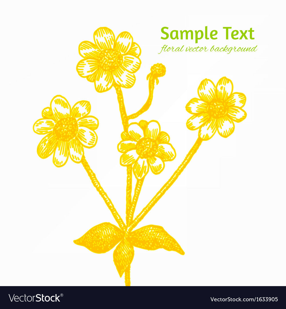 Sunny yellow chamomile background vector image