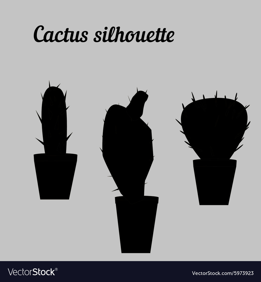 Cactus silhouette white and black draw vector image