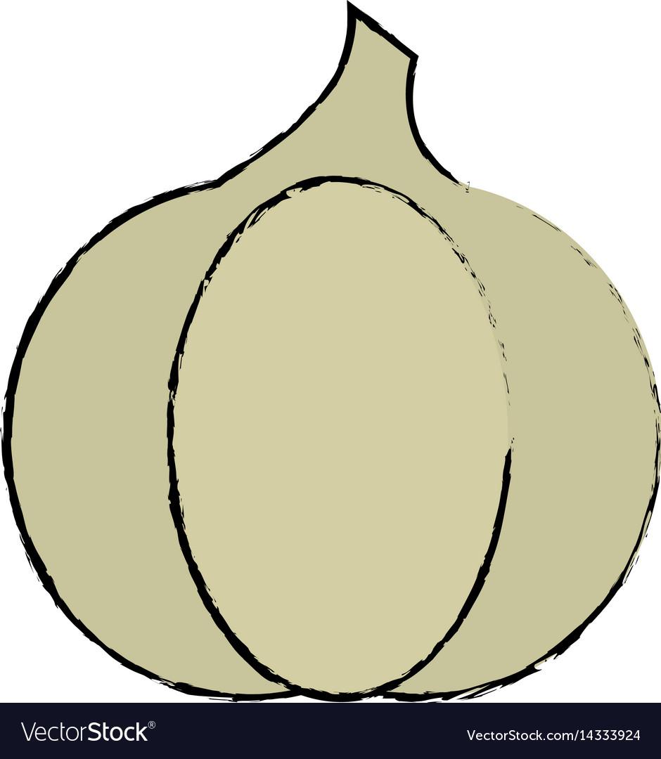 Drawing garlic vegetable diet nutrition vector image