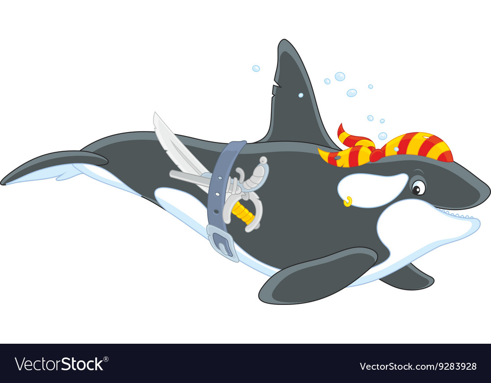 Killer whale pirate vector image