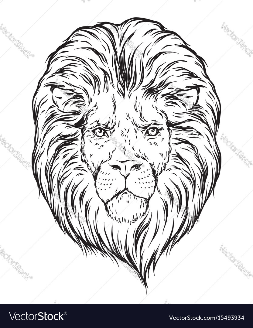 Hand drawn lion head isolated over white vector image