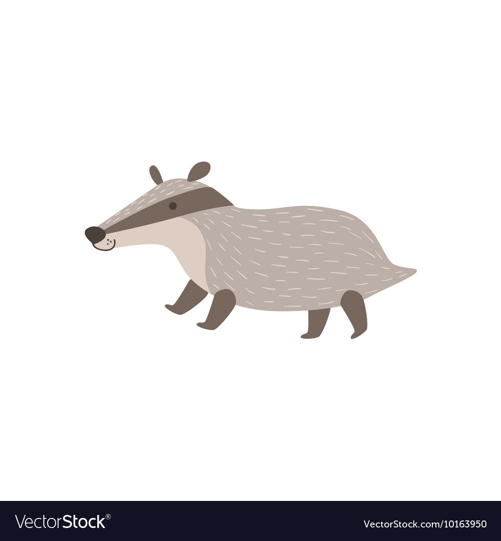 Grey Badger Walking vector image