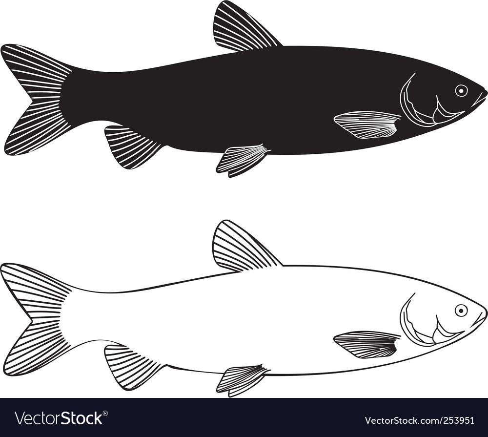 Fish grass carp vector image