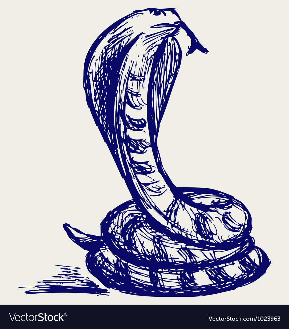 Snake sketch vector image