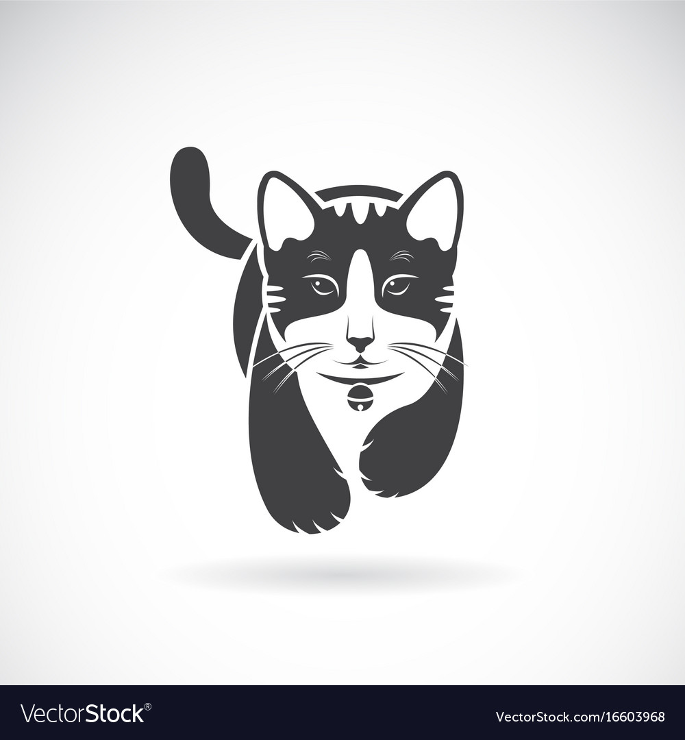 Cat on white background pet animal vector image