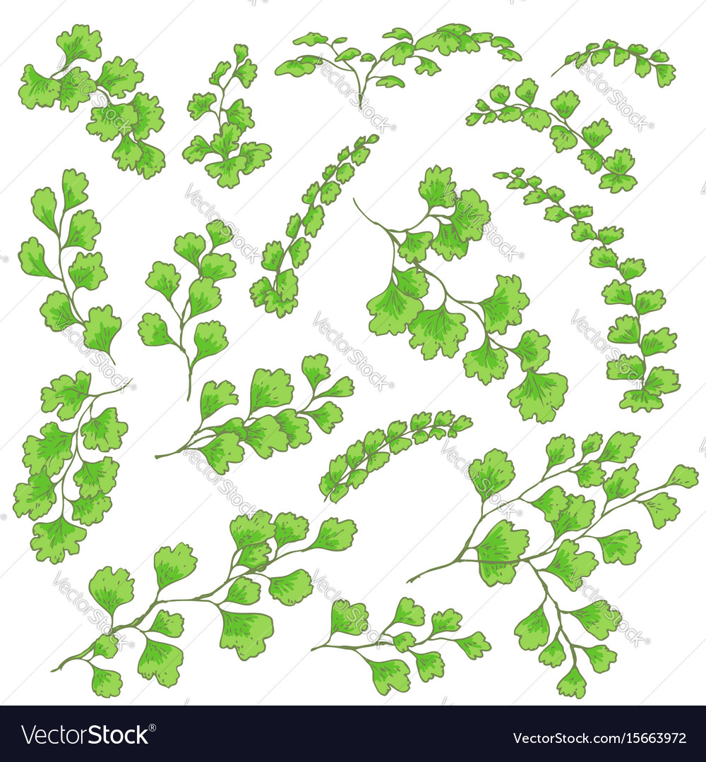 Green fern leaves sketch vector image