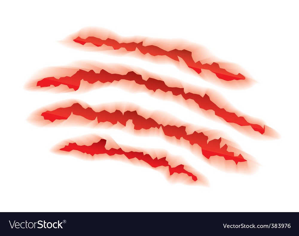 Animal claws torn vector image