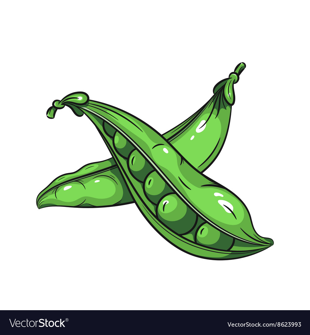 Green peas on white background vector image