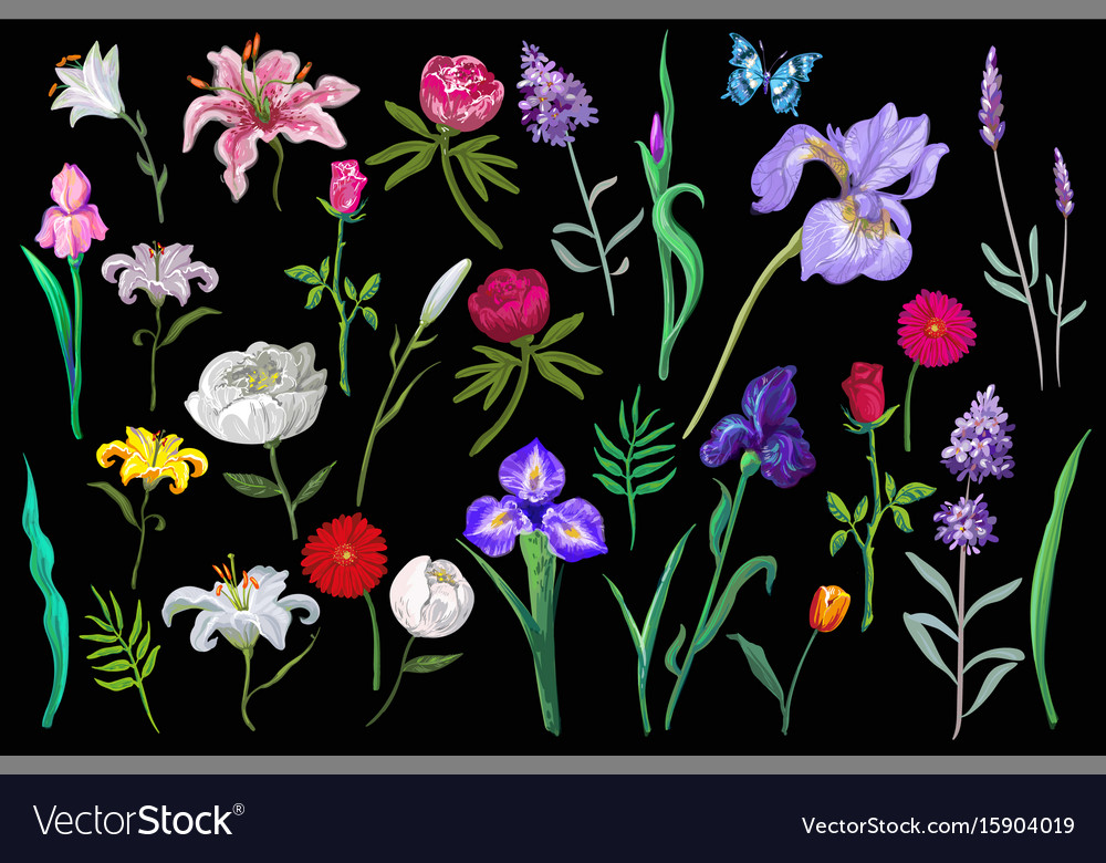 Big amazing set of lovely flowers in pastel vector image
