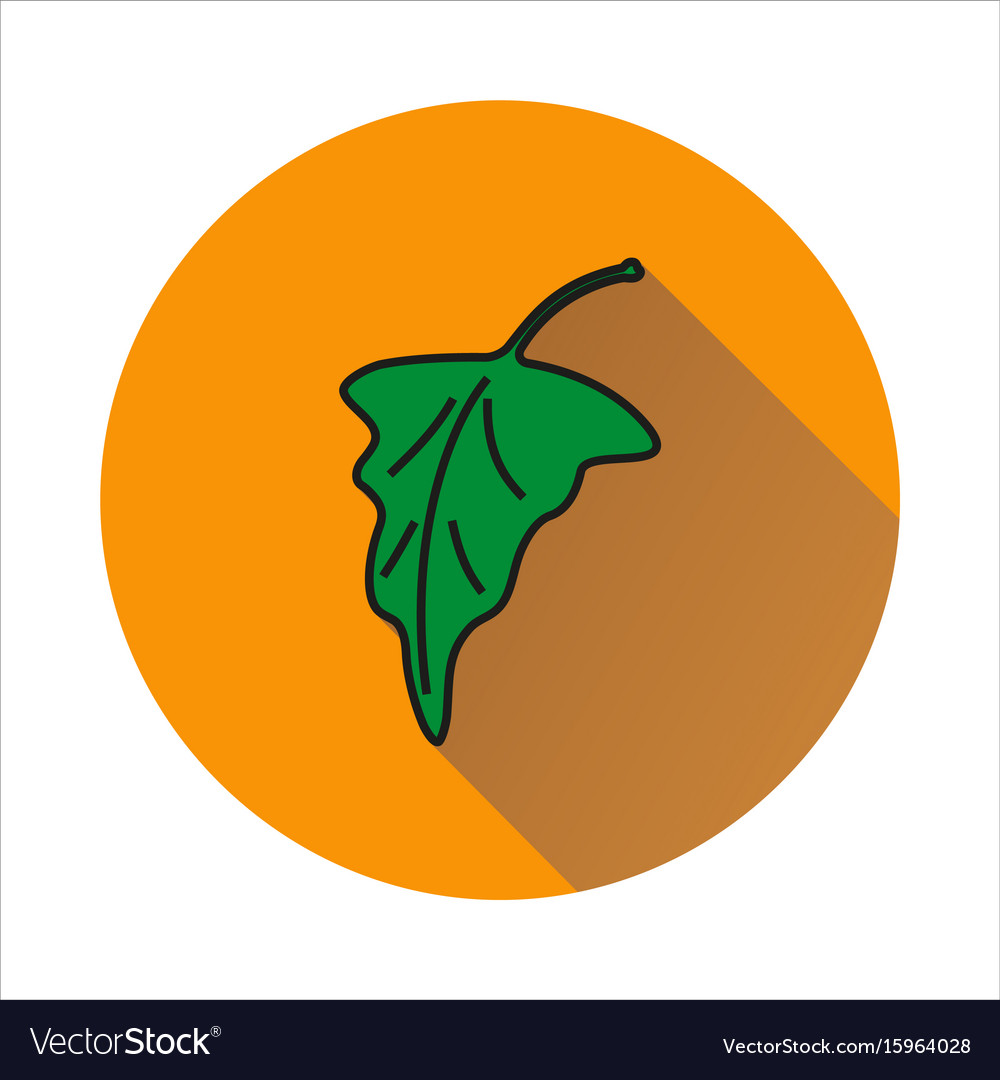 Grape leaf simple icon on white background vector image