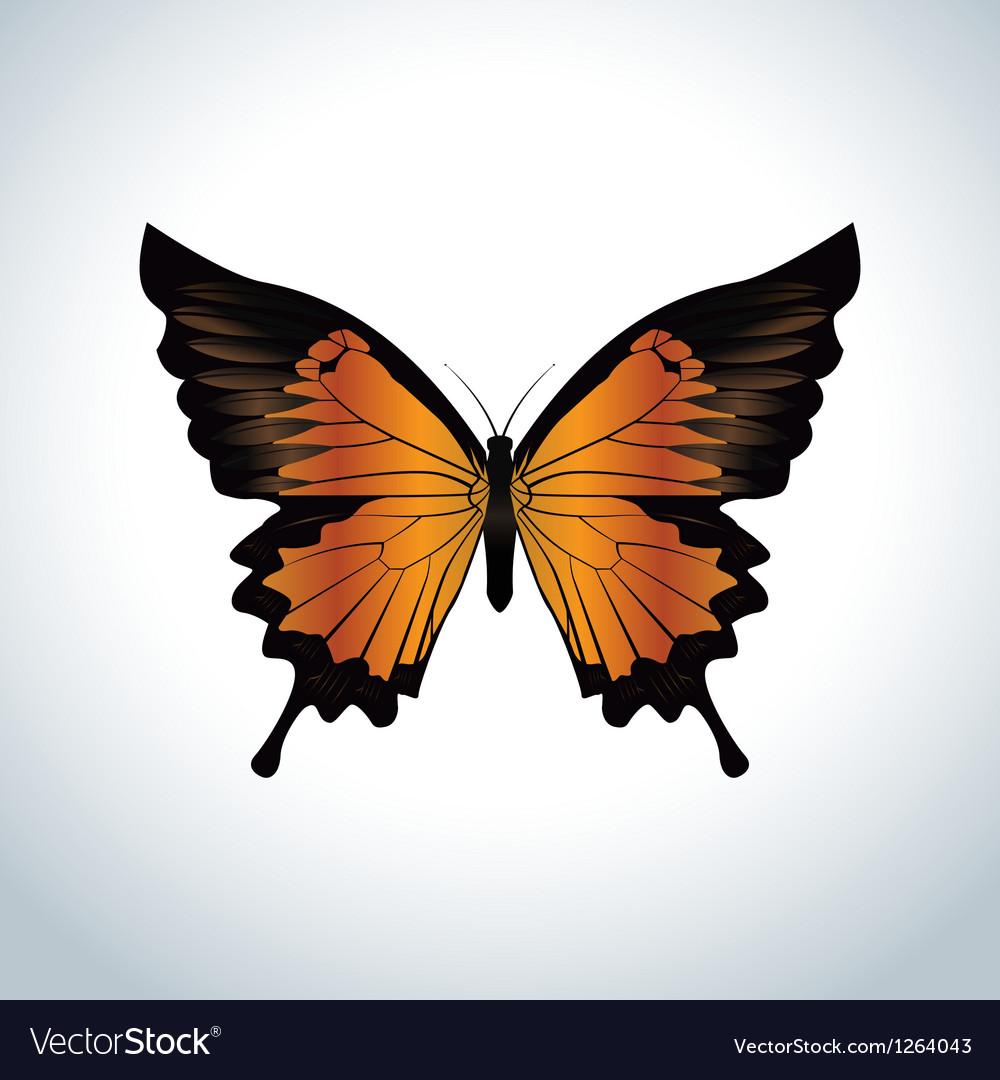 Orange butterfly vector image