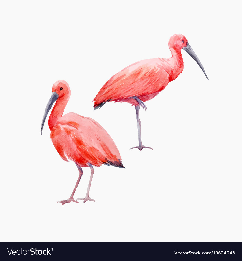 Bird ibis vector images 63 buycottarizona Choice Image