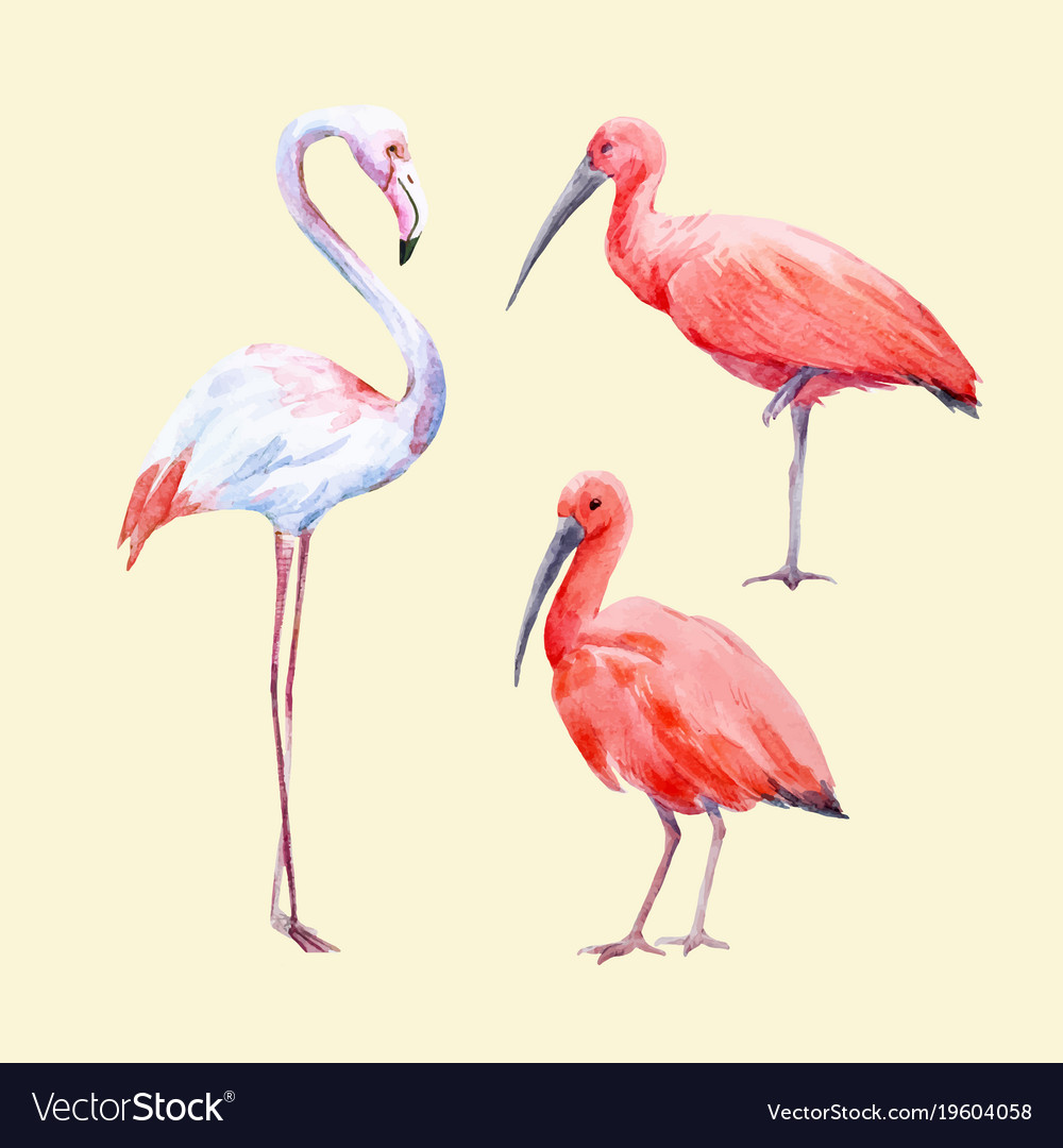 Watercolor ibis and flamingo set royalty free vector image watercolor ibis and flamingo set vector image buycottarizona Choice Image