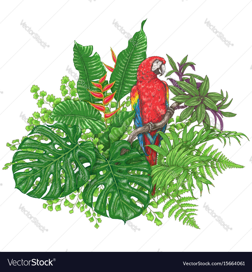 Tropical plants and sitting macaw vector image
