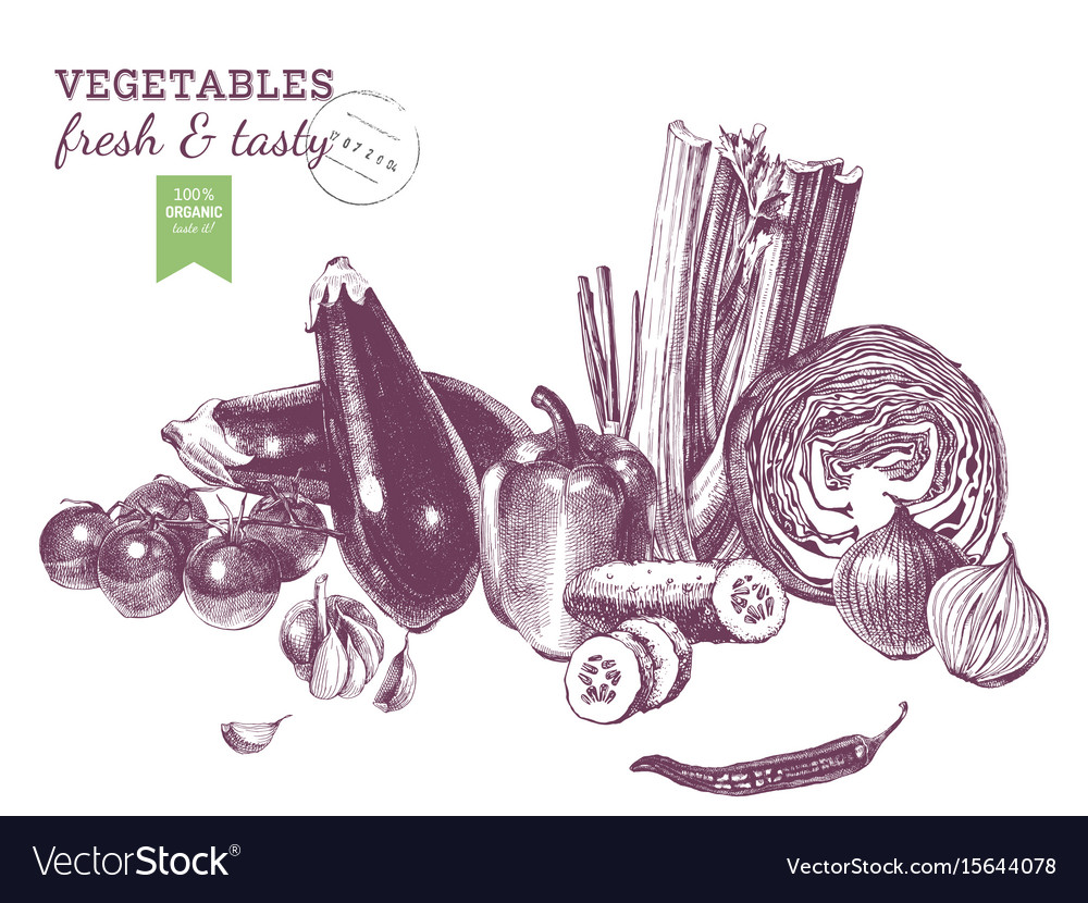 Hand drawn vegetables border vector image