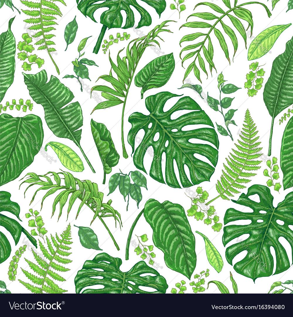 Hand drawn tropical plants pattern vector image