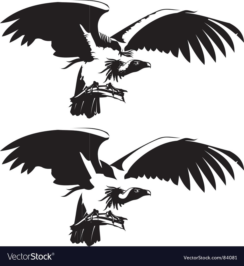 condor royalty free vector image vectorstock