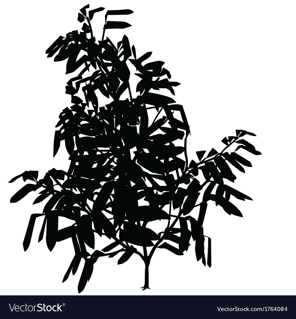 exotic tree silhouette royalty free vector image rh vectorstock com tree silhouette vector file tree silhouette vector art