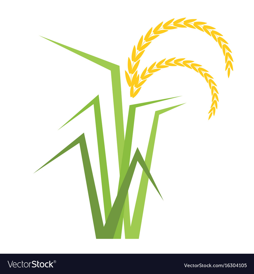 Rice tree in flat style vector image