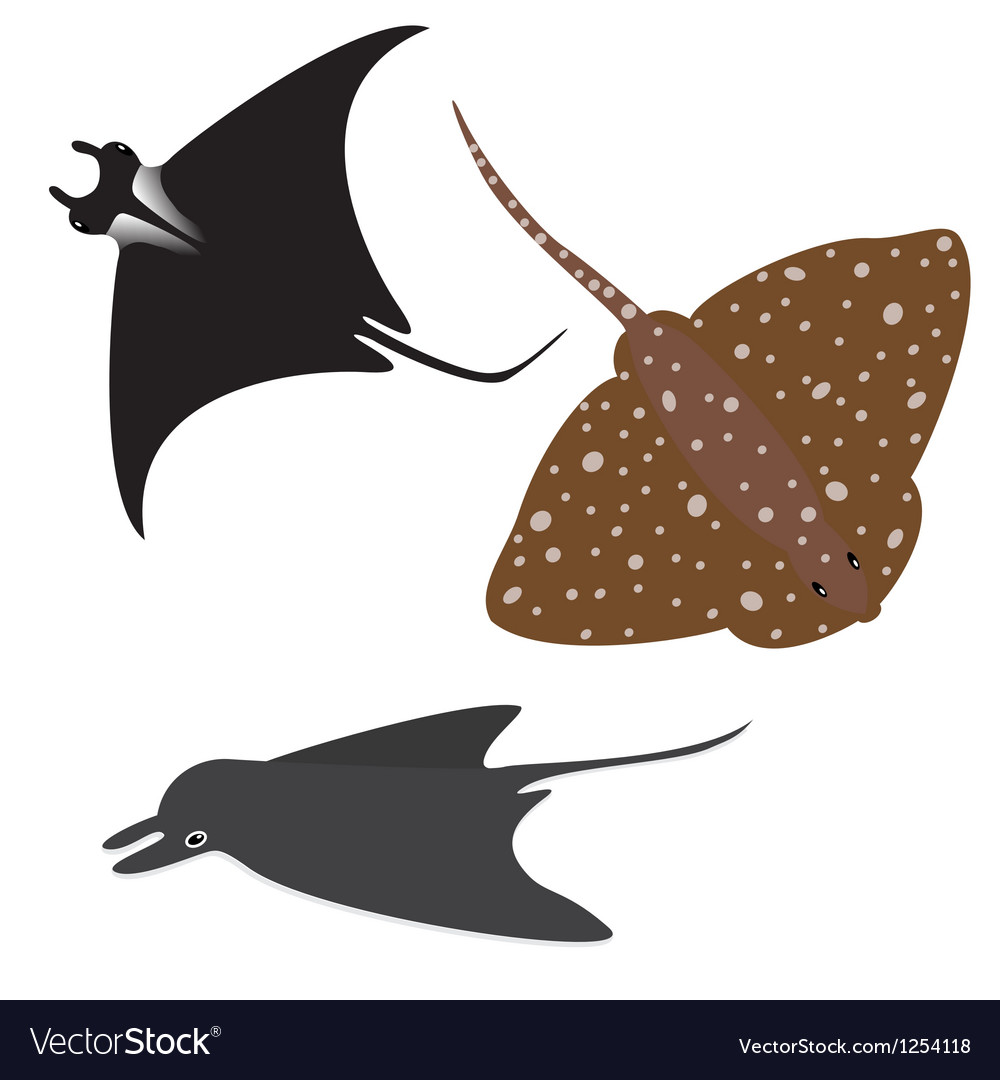 Stingray set vector image