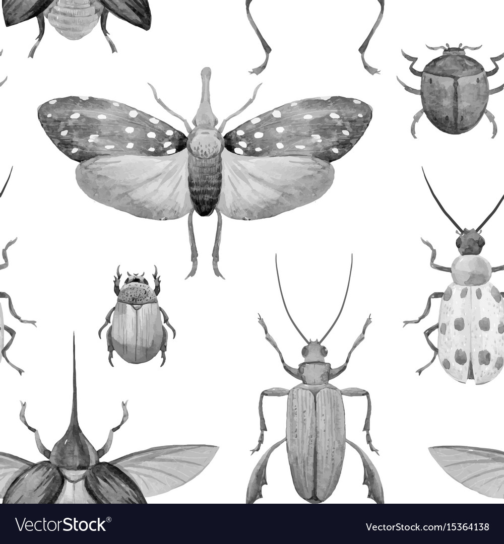 Watercolor beetle pattern vector image