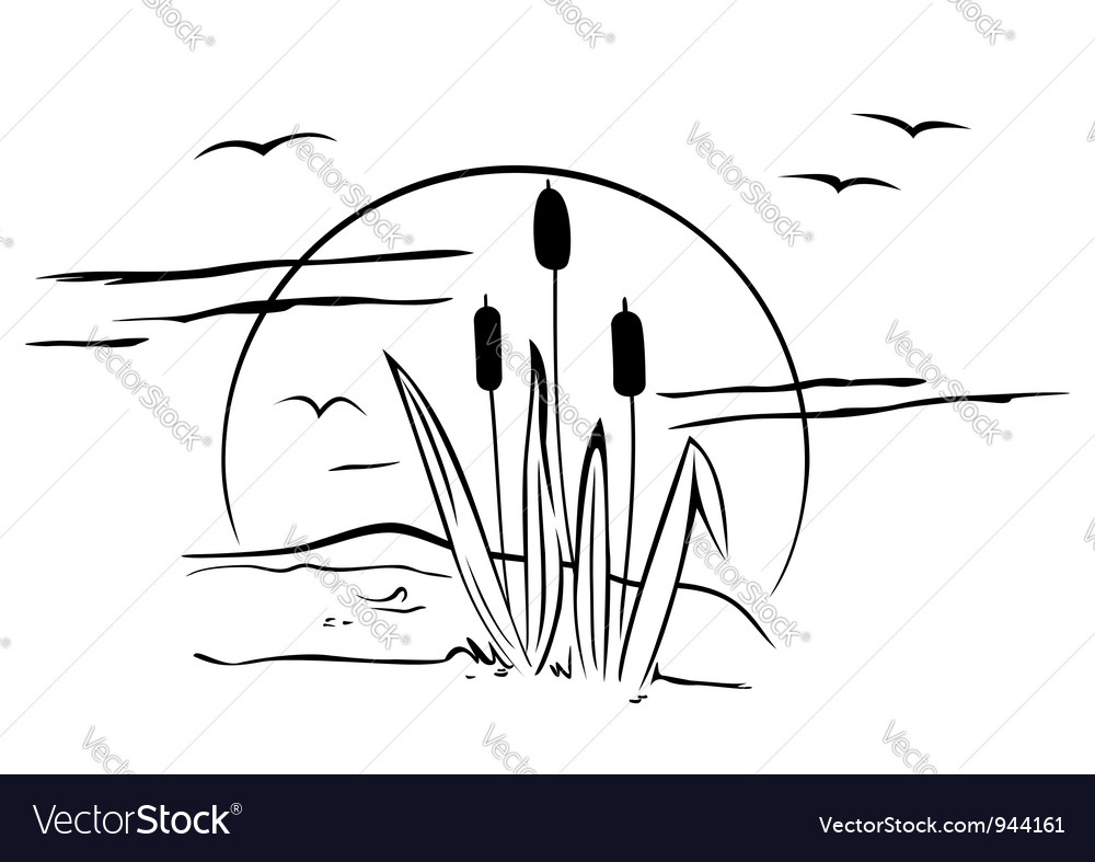 Cattails on vector image
