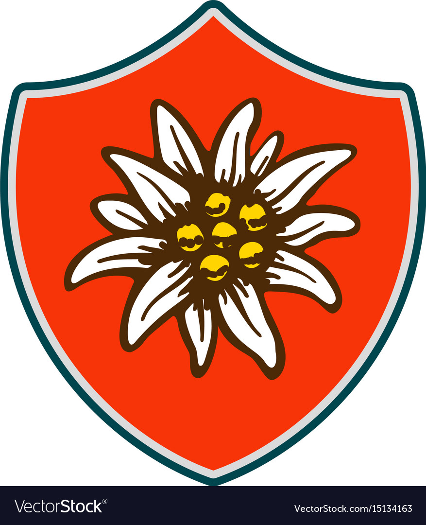 Edelweiss shield flower symbol alpinism alps vector image edelweiss shield flower symbol alpinism alps vector image buycottarizona