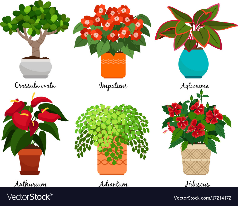 Superbe House Flowers And Indoor Flowerpots Vector Image