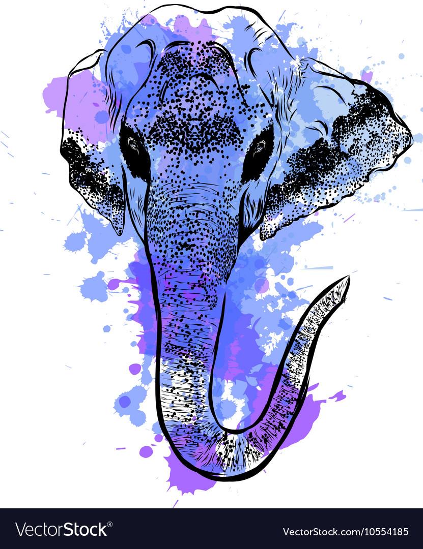 Watercolor elephant portrait on white background vector image