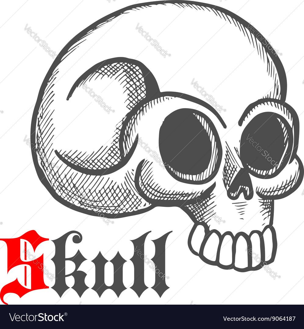 Monstrous human skull sketch symbol vector image